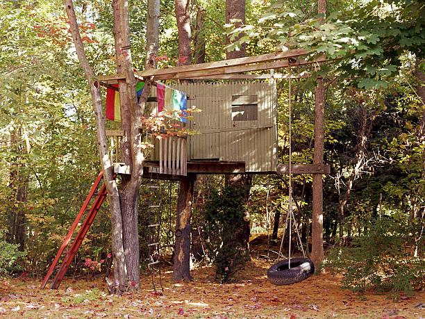Construction cabane dans un arbre